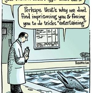 Dolphin's brain is even bigger than ours…