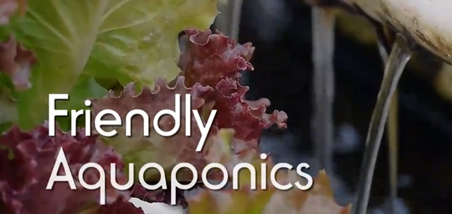 Friendly Aquaponics