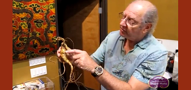 Ron Teeguarden Preparing Fresh Wild Ginseng for Heaven Drops